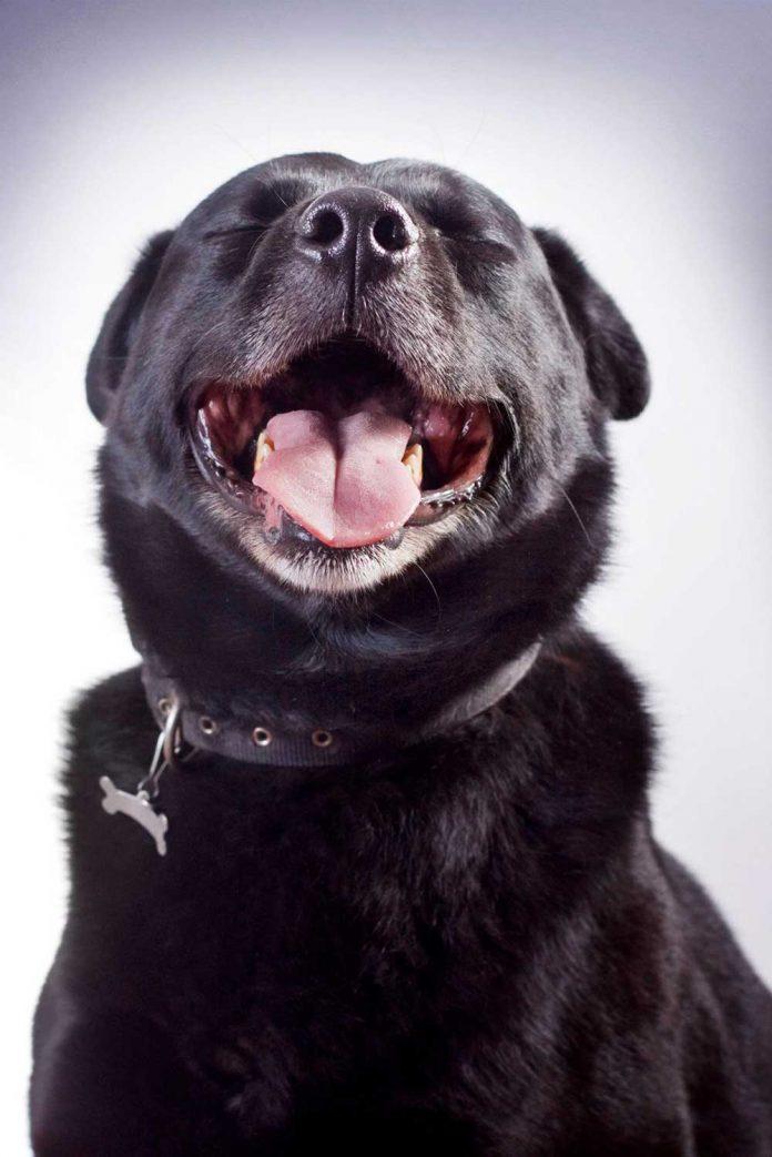 fotos de perros en casa