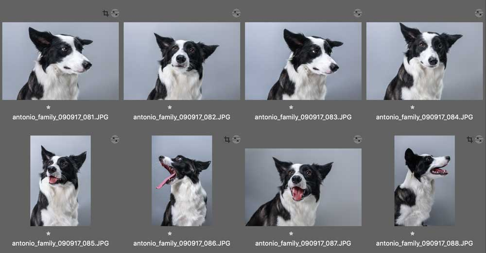 retratos de perros y mascotas